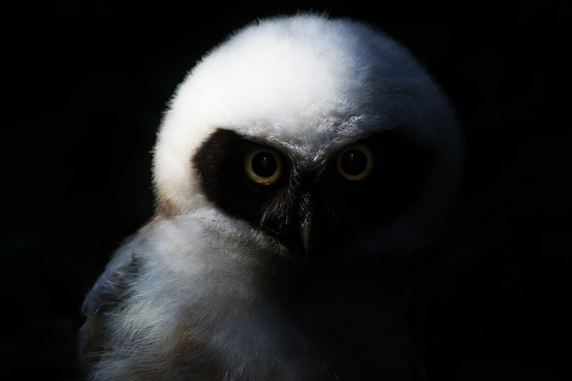 owl-644482_640