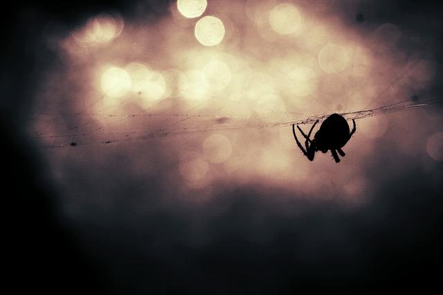 spider-407141_640