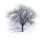 tree-530324_640